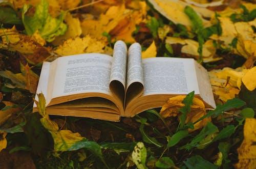 Ảnh lưu trữ miễn phí về đọc hiểu, đọc sách, lá mùa thu, miễn phí