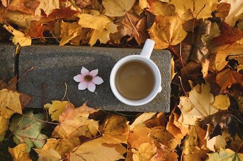 Ảnh lưu trữ miễn phí về chăm học, cốc trà, hoa, lá mùa thu