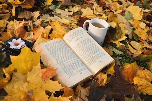 Ảnh lưu trữ miễn phí về chăm học, cốc trà, đọc hiểu, đọc sách