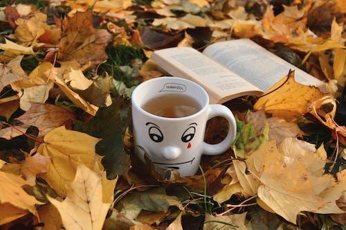 Ảnh lưu trữ miễn phí về buồn, chăm học, cốc trà, đọc hiểu