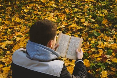 Ảnh lưu trữ miễn phí về cây phong, con trai, công viên, cuốn tiểu thuyết