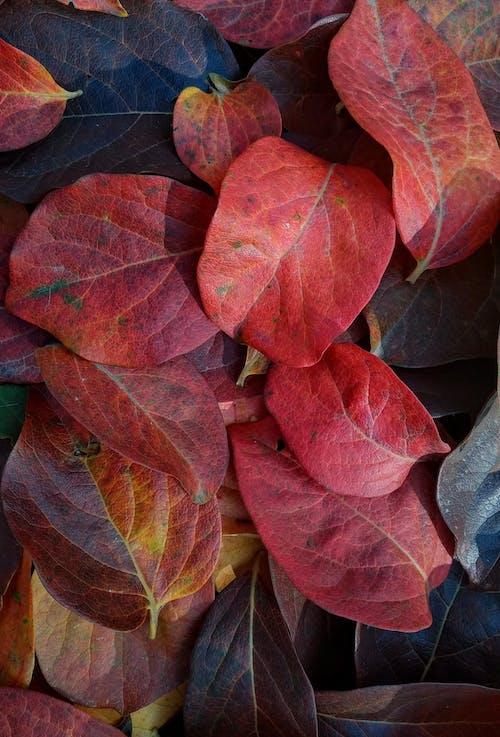 Free stock photo of abstract, autumn aesthetic, autumn atmosphere