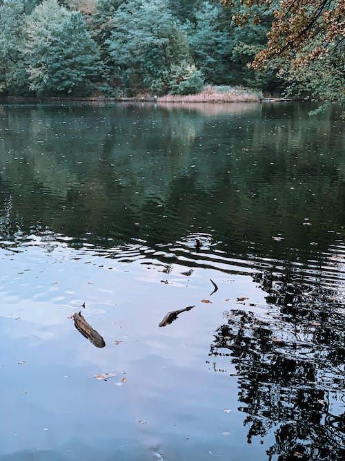Calm lake rippling in autumn park