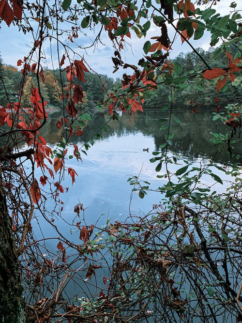 Branches of trees with fading leaves in foreground and picturesque view of calm lake reflecting forest