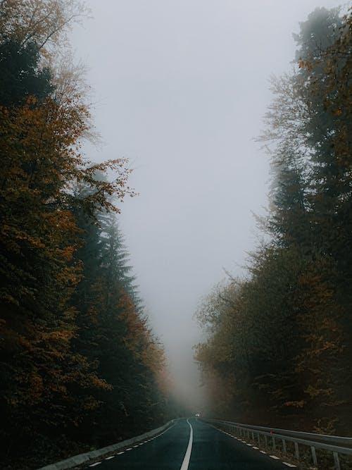 Asphalt road through autumn forest