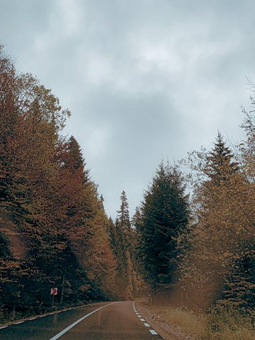 가을, 경로, 고속도로의 무료 스톡 사진
