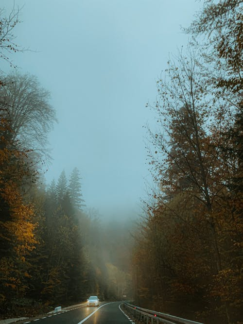 Distant automobile with headlights riding on asphalt highway surrounded by tall trees in misty weather on autumn day in nature