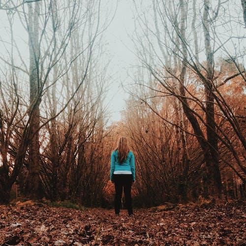 Imagine de stoc gratuită din anotimp, arbore, autum
