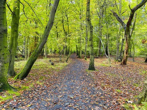 Free stock photo of autumn leaves, green, path