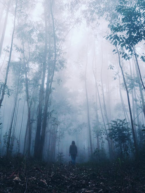 Unrecognizable person standing in foggy spooky forest