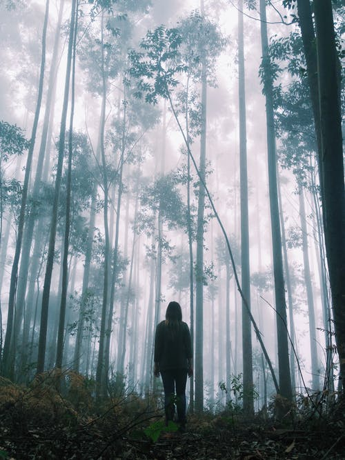 Unrecognizable person standing in quiet foggy forest