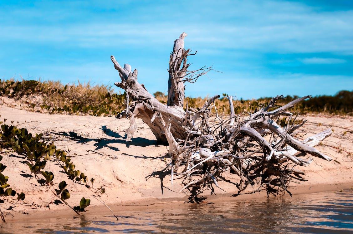 나무, 해변의 무료 스톡 사진
