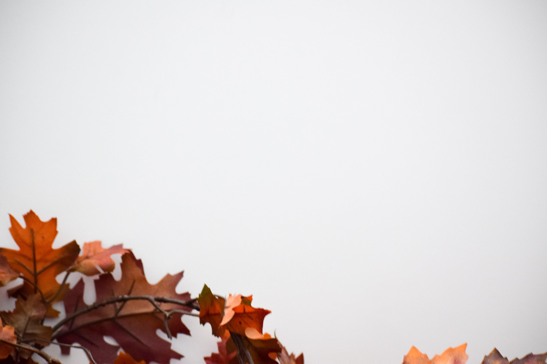 Free stock photo of autumn, fall, fall foliage, fall leaves