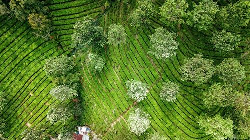 Бесплатное стоковое фото с агрономия, вид с квадрокоптера, вид сверху