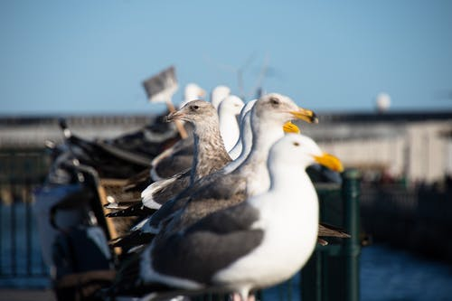 Lined Up White-and-gray Seagulls