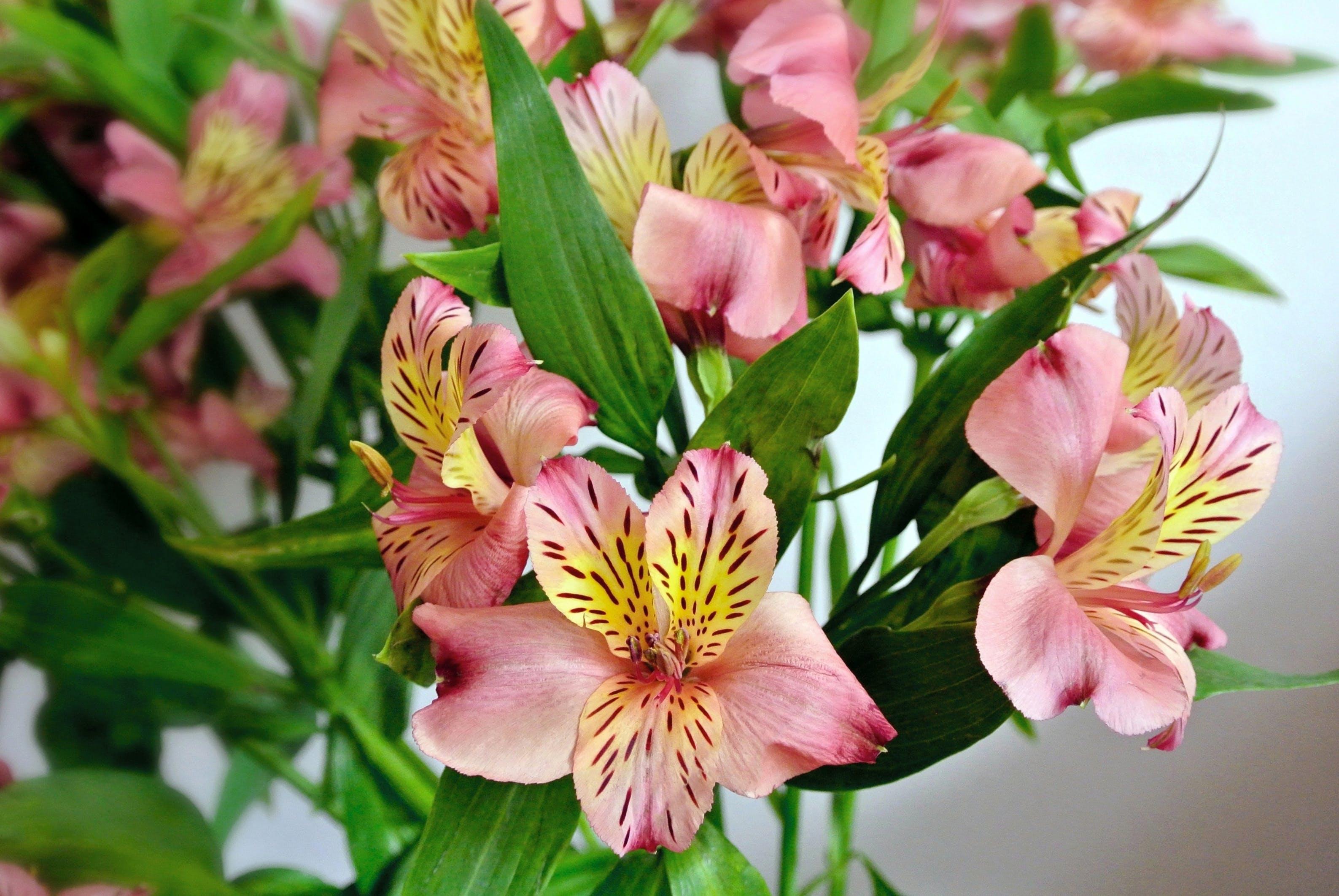 flores, flower, lirios