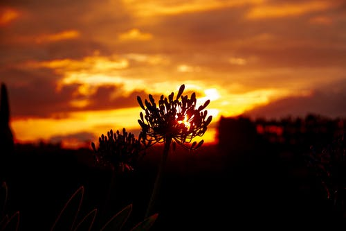 Gratis arkivbilde med flowes, goldenhour, gyllen sol