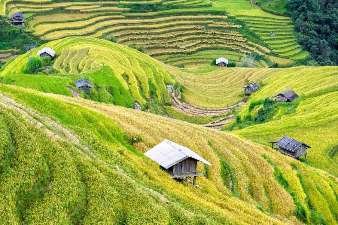 aratás, farm, fű