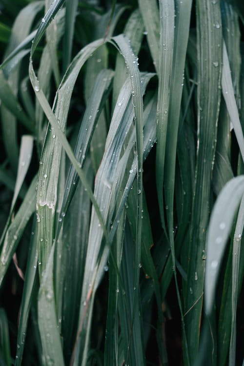 H2O, 녹색, 모바일의 무료 스톡 사진