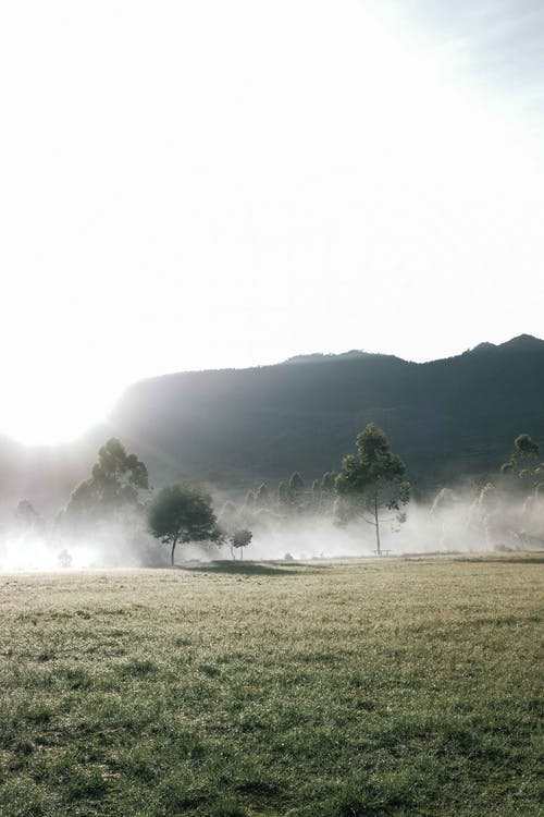 가을, 가장 밝은 부분, 간의 무료 스톡 사진