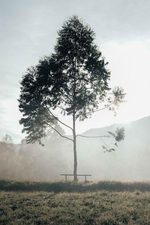 가을, 가장 밝은 부분, 가지의 무료 스톡 사진