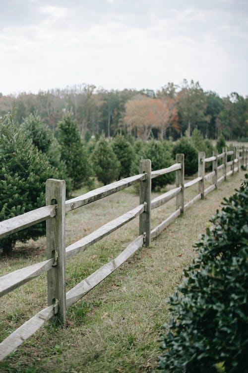 Fotos de stock gratuitas de abeto, al aire libre, Año nuevo, árbol