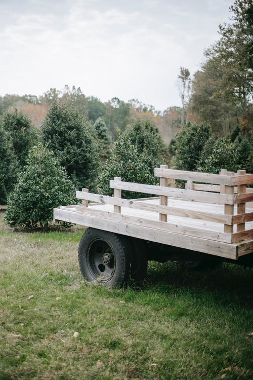 Lumber carriage on fir tree farm