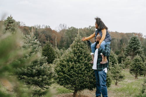 Black father and daughter choosing Christmas tree in field
