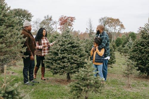 Black family choosing Christmas tree in field