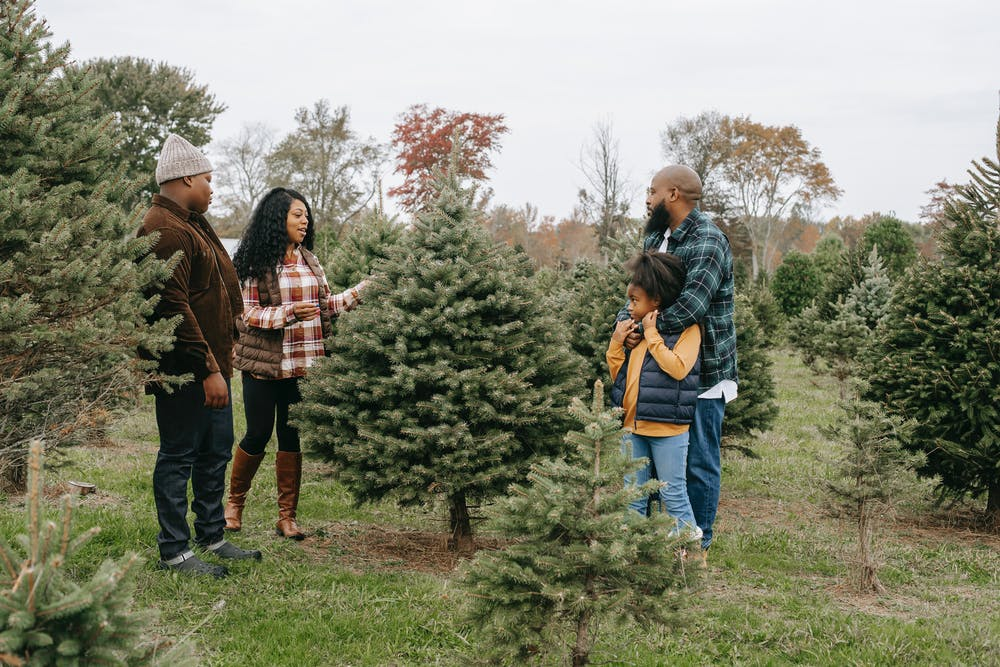 Christmas Tree Themes: Are They Really Worth It?