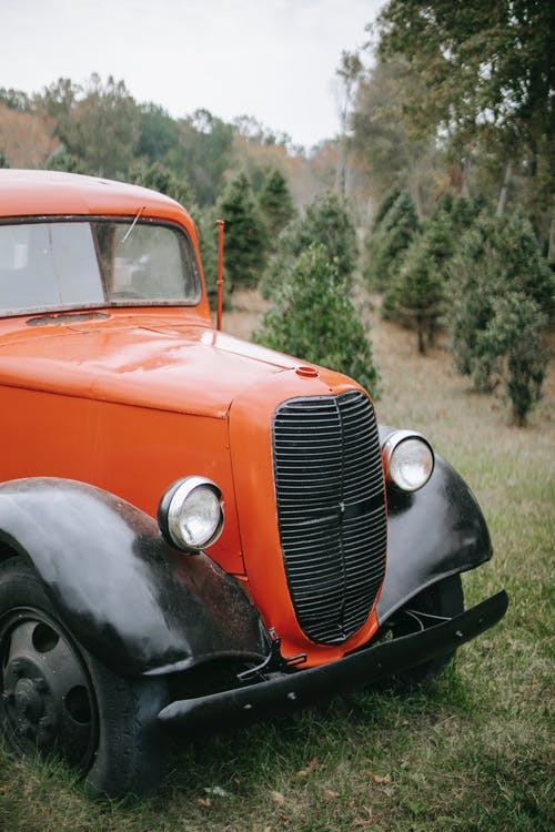 Old vintage car among fir trees
