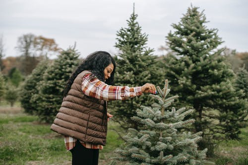 Side view of African American female holding branch of spruce while choosing Christmas tree