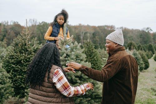 Fotos de stock gratuitas de abeto, al aire libre, alegre, Año nuevo