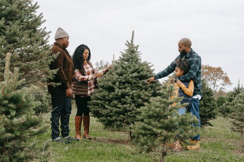 Black family standing in fir tree farm