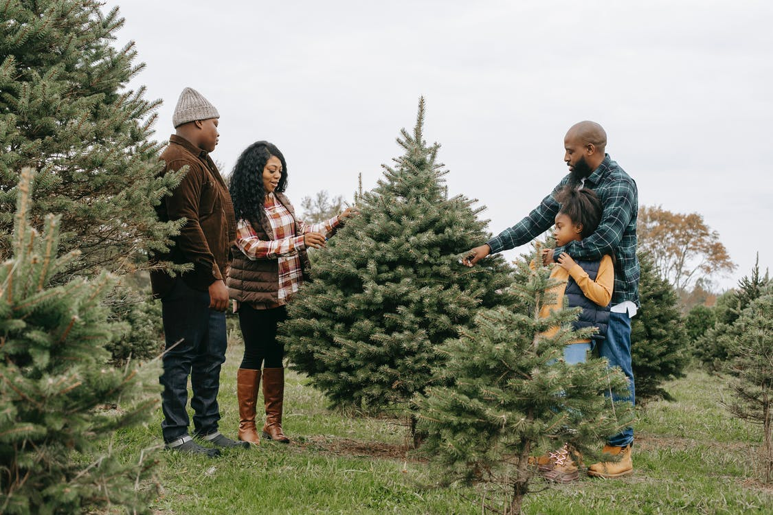 Side view full body of African American family members standing around tree and touching branches while choosing Christmas tree