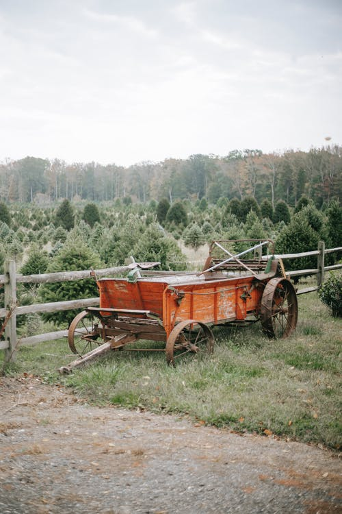 Rustic wooden cart on tree farm