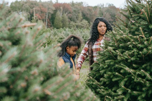 Positive African American mom choosing fir tree with daughter for New Year celebration