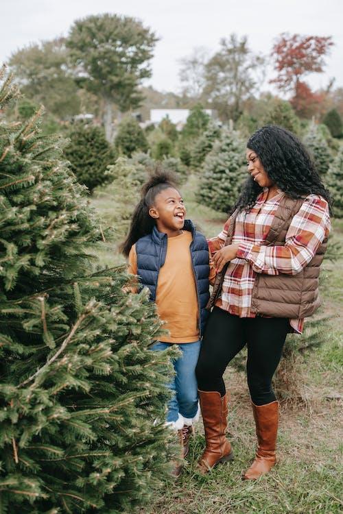 Fotos de stock gratuitas de agradable, alegría, Año nuevo, árbol