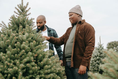 Low angle of positive African American dad and teen man touching thorny branches of green spruce while making choice of Christmas tree