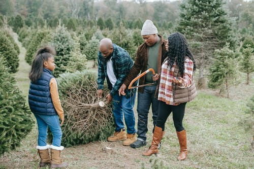 Black family carrying Christmas tree sawn on farm with spruces