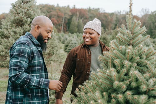 Positive African American father with son wearing casual clothes standing near spruce with green thin needles in Christmas tree farm