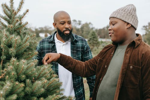 Smiling black dad talking to son touching needles of spruce