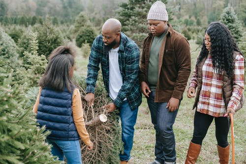 Black family carrying spruce cut for Christmas