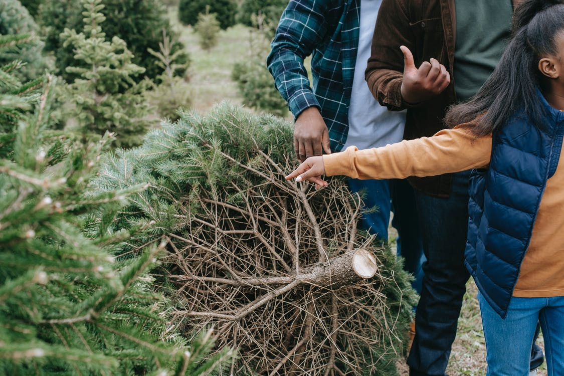 Unrecognizable African American kid with adults choosing lush green Christmas tree on farm in countryside while preparing for holiday celebration