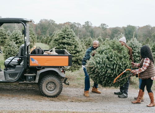 Unrecognizable black family carrying fir tree near ATV on farm