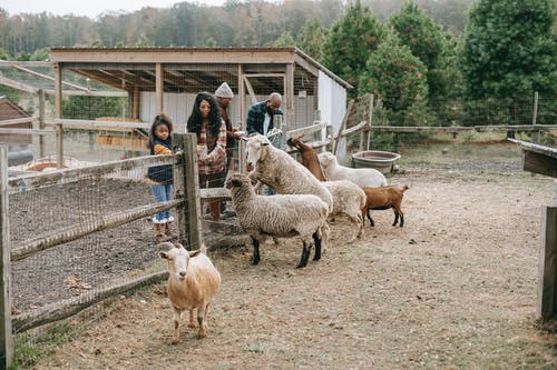 Ethnic family giving food to livestock animals on farmland