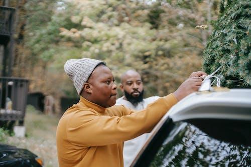 10대, 10대의, 가문비, 나무의 무료 스톡 사진