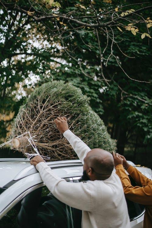 가문비, 나무, 남성, 남자의 무료 스톡 사진