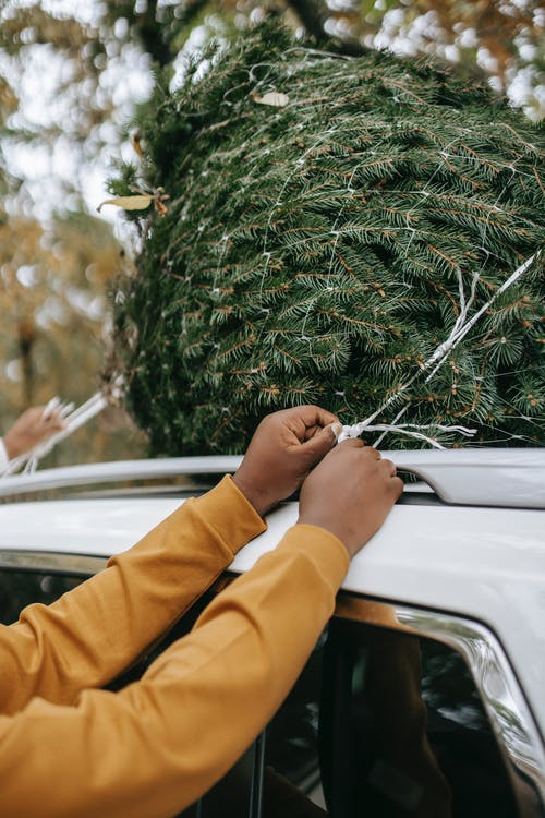 Unrecognizable black person tying spruce on automobile roof