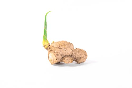 Free stock photo of ginger, growing, growth